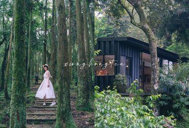 熊空茶園|彷彿走進精靈森林,品茶、步道、絕美茶梯田,讓靈魂慢下來的私房秘境